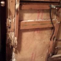 A Termites Smorgasbord