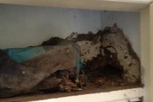 Ashmore Termite Treatment