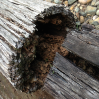A Feast for Termites