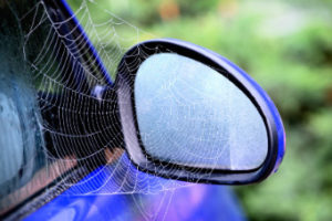 Spider Proofing Your Car