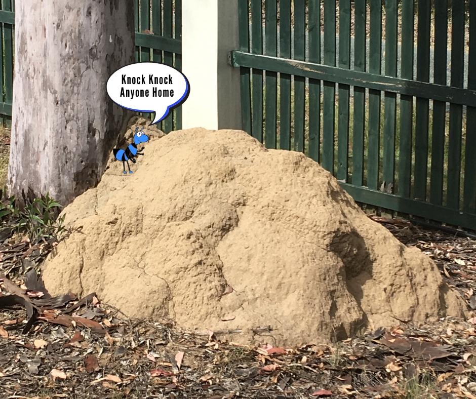 Termites nest against big gum